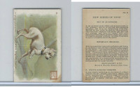 J14, Church & Dwight, New Ser.Dogs Small, 1910, #8 White English Terrier