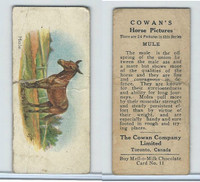 V14 Cowan, Horse Pictures, 1929, #11 Mule