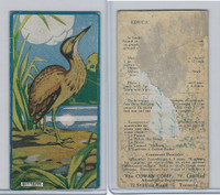 V6 Cowan, Educational Pictures Birds, 1924, Bittern