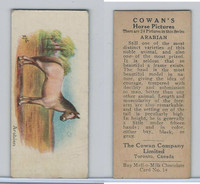 V14 Cowan, Horse Pictures, 1929, #14 Arabian
