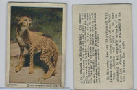 V67 Neilson's Chocolate, Wild Animals, 1930's, #A13 Cheetah