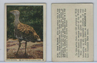 V67 Neilson's Chocolate, Wild Animals, 1930's, #A20 Great Bustard
