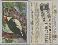 D39-2b, Gordon Bread, California Birds, 1940's, California Woodpecker