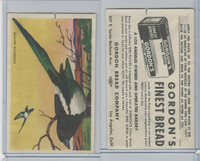 D39-11 Gordon Bread, Bird Pictures, 1950, American Magpie