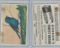 D39-11 Gordon Bread, Bird Pictures, 1950, Indigo Bunting
