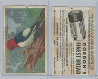 D39-11 Gordon Bread, Bird Pictures, 1950, Red Headed Woopecker