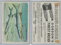 D39-13 Gordons Bread, Denizens Of Deep, 1950's, Barracuda Fish
