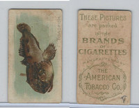T407A American Tobacco Company, Fish American Waters, 1910, Toadfish