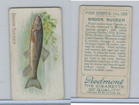 T58 American Tobacco, Fish, 1910, Brook Sucker