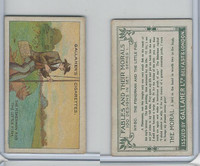 G12-18 Gallaher, Fables & Their Morals, 1912, #80 Fisherman & The Little Fish