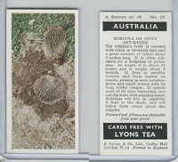 L0-0 Lyons Tea, Australia, 1959, #22 Echidna or Spiny Ant-Eater