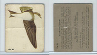 V339-2 Parkhurst, Audubon Society Birds, 1952, #64 Bank Swallow