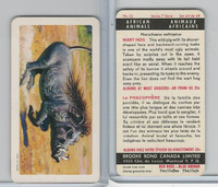 FC34-7 Brook Bond, African Animals, 1964, #32 Wart Hog