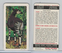 FC34-7 Brook Bond, African Animals, 1964, #36 Okapi