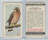 FC34-5 Brook Bond, Birds North America, 1962, #24 Broad-Winged Hawk