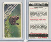 FC34-10 Brook Bond, Canadian/Am. Songbirds, 1966, #21 Winter Wren