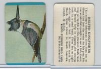 F218-2 Kosto Pudding, Bird Cards, 1964, #23 Belted Kingfisher