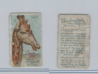 T330 Piedmont Cigarette, Art Stamps, Animals, 1910, Giraffe