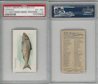 T407 American Tobacco Company, Fish American Waters, 1910, Herring, PSA 6 EXMT