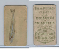 T407 American Tobacco Company, Fish From American Waters, 1910, Whitebait