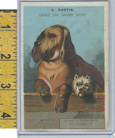 Victorian Card, 1890's, Curtin Dry Goods Store, San Francisco, Dogs