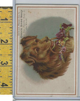Victorian Card, 1890's, Detroit Soap Co., Brown Dog With Basket of Flowers