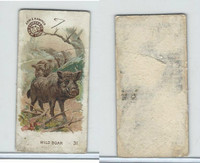 J10s, Church & Dwight, Interesting Animals Small, 1897, #31 Wild Boar