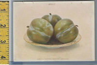 Victorian Card, 1890's, Natural Process, July, Plums