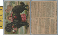 Victorian Card, 1890's, Prof Horsfords Baking Powder,  Our Pet, Girl