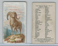 E28 Philadelphia Caramel, Zoo Cards, 1909, Bighorn Sheep