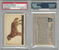 F279-5 Quaker, Challenge Yukon, Dog Cards, 1950, Golden Retriever, PSA 5 EX
