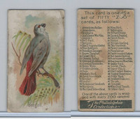 E30 Philadelphia, Zoo Cards, Song Birds, 1907, Bengali
