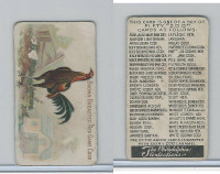 E31 Philadelphia, Zoo Cards, Game Fowl, 1907, Brown Breasted Red Game Cock
