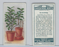 C15 Imperial Tobacco, Gardening Hints, 1923, #11 In-arching