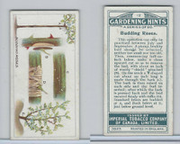 C15 Imperial Tobacco, Gardening Hints, 1923, #12 Budding Roses