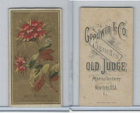 N164 Goodwin Cigarettes, Flowers, 1890, Sweet William (B)