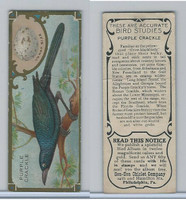 E225-2 Sen Sen Chiclet, Accurate Bird Studies, 1930, Purple Crackle