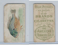 T407A American Tobacco Company, Fish American Waters, 1910, Sunfish
