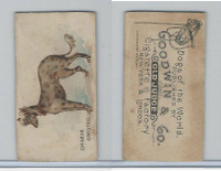 N163 Goodwin, Dogs of World, 1890, Chinese Crested