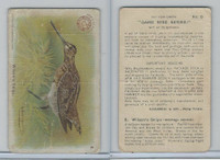 J3, Church & Dwight, Game Bird Series, 1904, #8 Wilson's Snipe