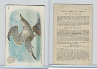 J4, Church & Dwight, New Series of Birds, 1908, #19 Gull