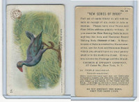 J4, Church & Dwight, New Series of Birds, 1908, #24 Purple Gallinule