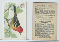 J7, Church & Dwight, Useful Birds America 3rd Ser., 1922, #15 Western Tanager