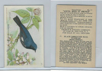 J7, Church & Dwight, Useful Birds America 3rd Ser., 1922, #17 BTB Wood Warbler