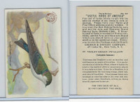 J7, Church & Dwight, Useful Birds America 3rd Ser., 1922, #22 Violet-g Swallow