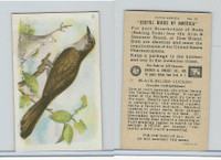 J9-1, Church & Dwight, Useful Birds America 5th Ser., 1925, #12 Black-b Cuckoo