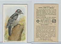J9-1, Church & Dwight, Useful Birds America 5th Ser., 1925, #13 Dow Woodpecker