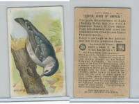 J9-2, Church & Dwight, Useful Birds America 6th Ser., 1925, #7 Nuthatch