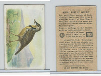 J9-2, Church & Dwight, Useful Birds America 6th Ser., 1925, #11 Meadow Lark