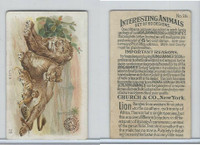 J10, Church & Dwight, Interesting Animals, 1897, #26 Lion